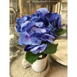 Fleur Hortensias