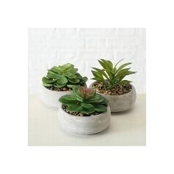 """Plante en pot """"Succulent"""""""